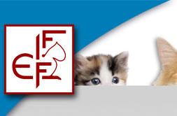 FIFE Katzenclub